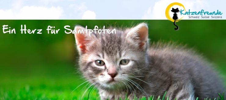 Katzenfreunde-Schweiz