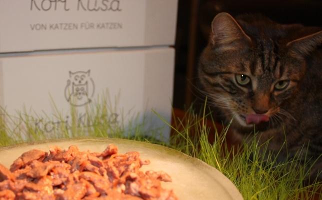 Kori-Kusa-Katzenfutter-Bestes-Katzenfutter