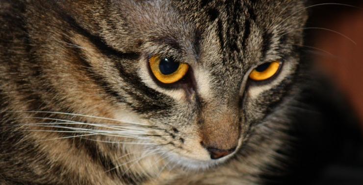 Kori-Kusa-Katzenfutter-Lexikon