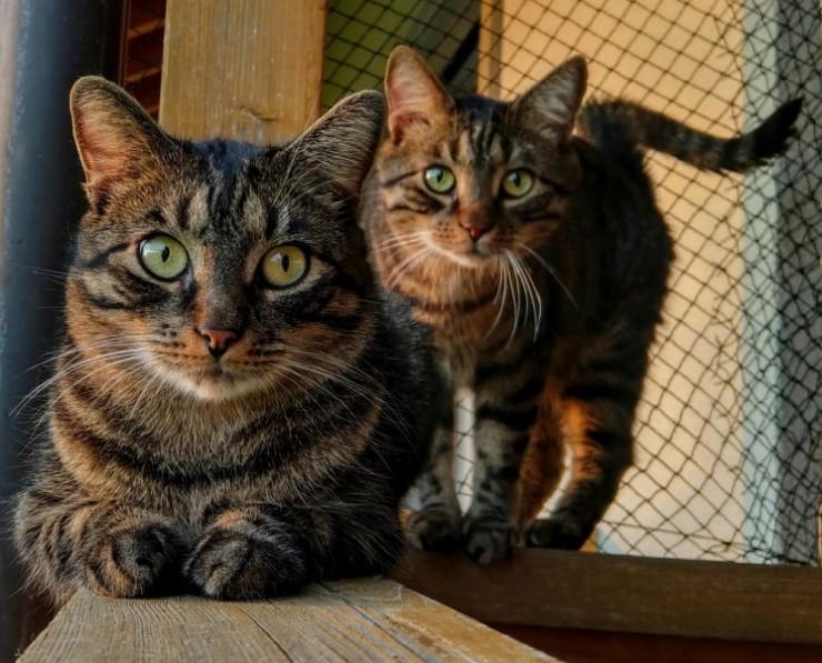 Kori-Kusa-Katzenfutter-Story