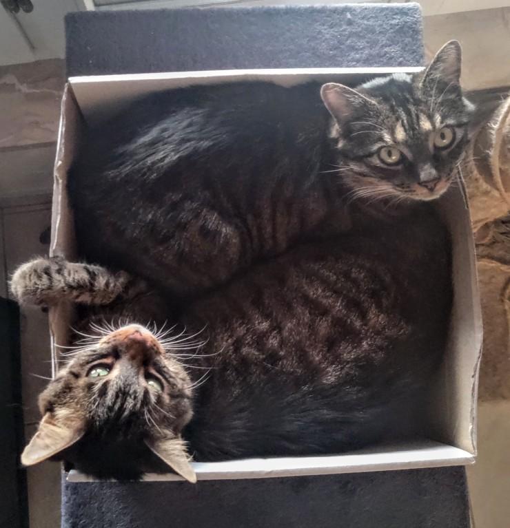 Kori-Kusa-Katzenfutter-Kori-und-Kusa-im-Karton